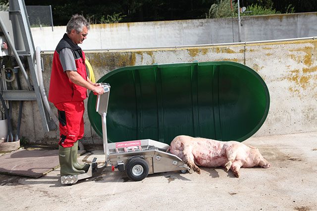 The dead animal is removed at the disposal site - similar to picking up with Porky's Pick Up by movement of the rollers.