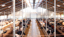 Low-pressure cooling in dairy cattle buildings achieves great success in maintaining milk yields due to the increased animal well-being and thus a consistently high feed intake.